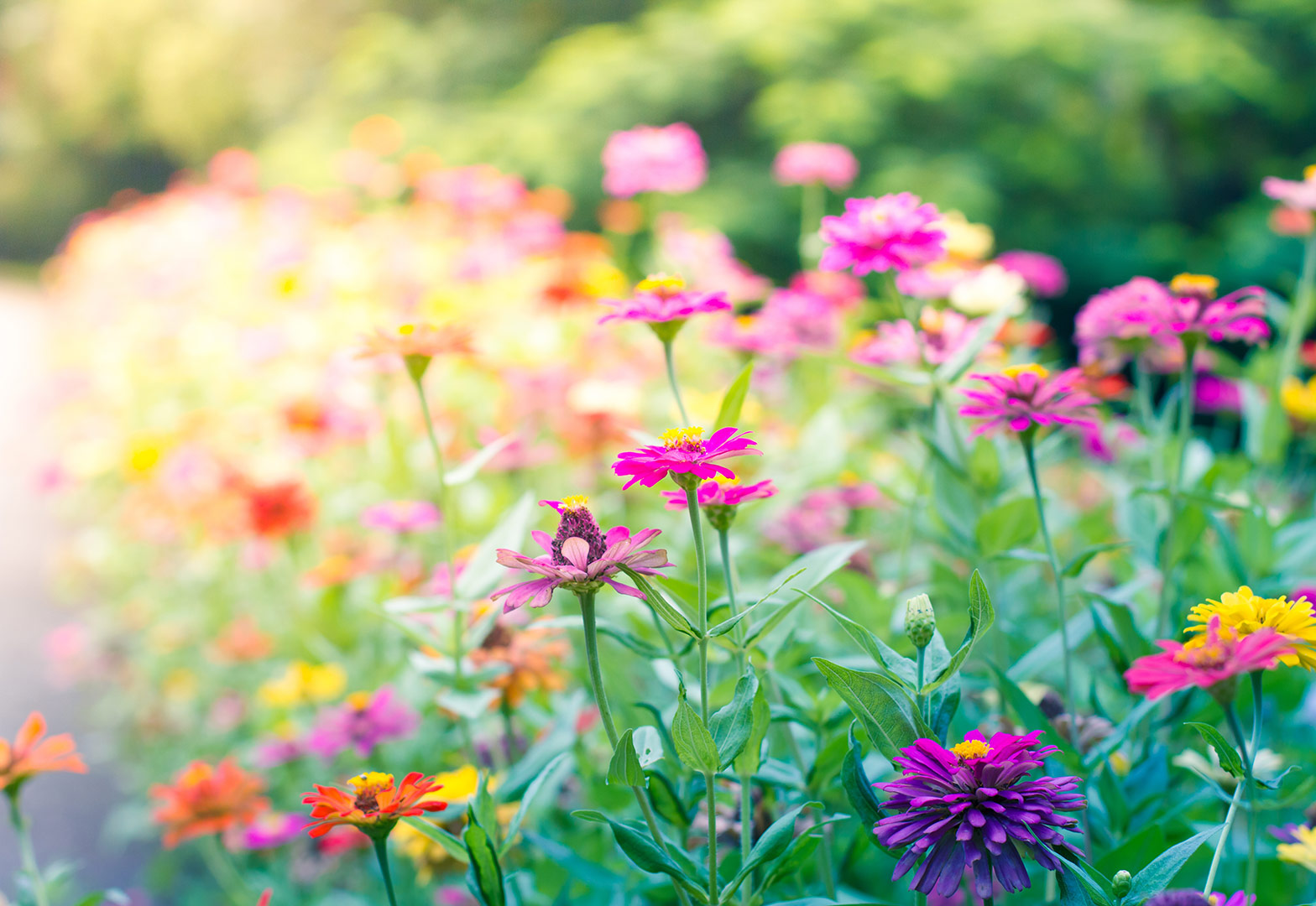 image-of-garden-flower-bed