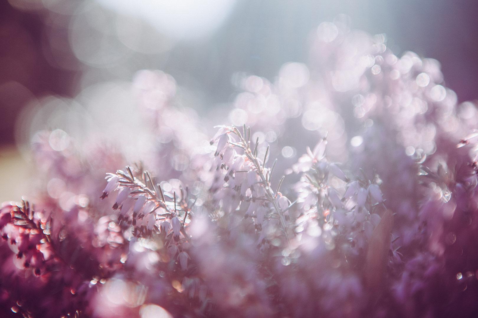 image-of-purple-flowers