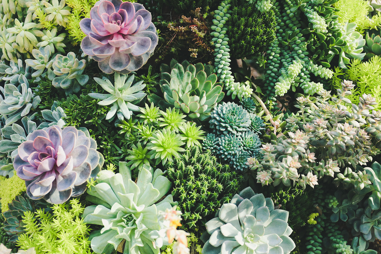 image-of-green-garden-plants
